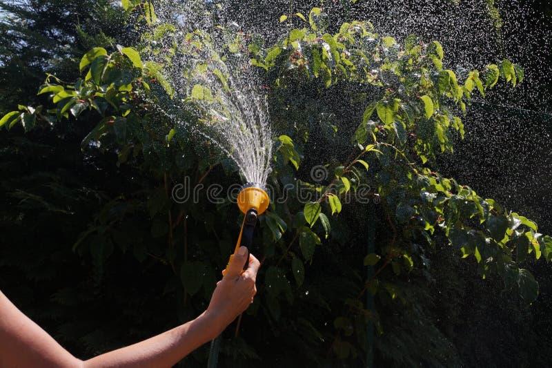 水一条被日光照射了小河  与一支水枪的浇灌的庭院庄稼 图库摄影