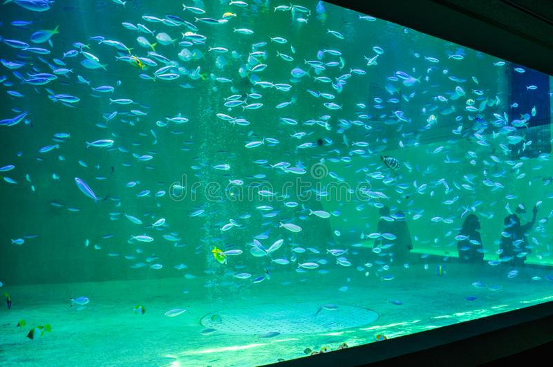 水一辆大坦克与许多鱼的在水族馆 免版税库存图片