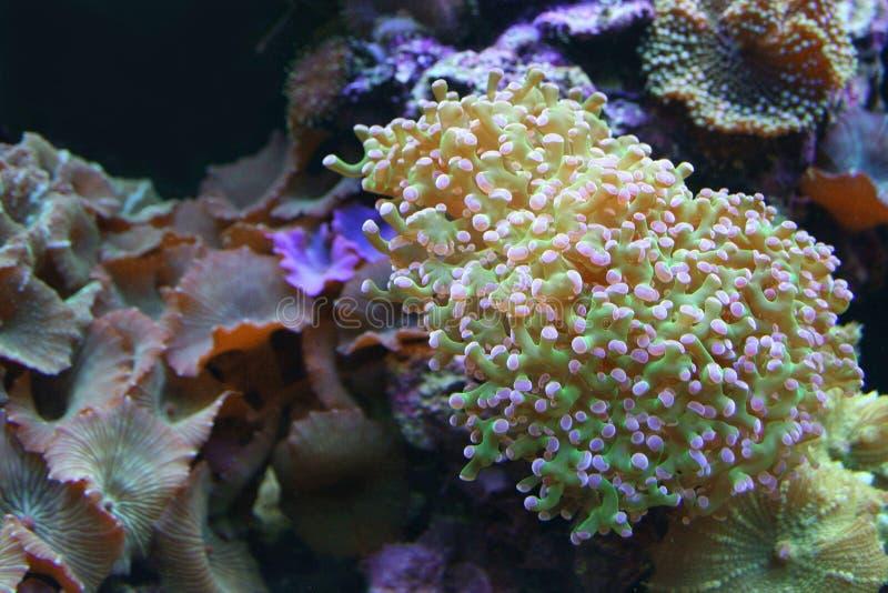 水上乐园 珊瑚庭院 图库摄影