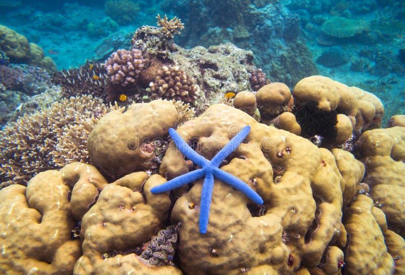 水下横向的海星 珊瑚海里的照片 海滨纹理 免版税图库摄影