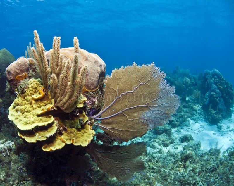 水下珊瑚礁的滚动 免版税库存图片