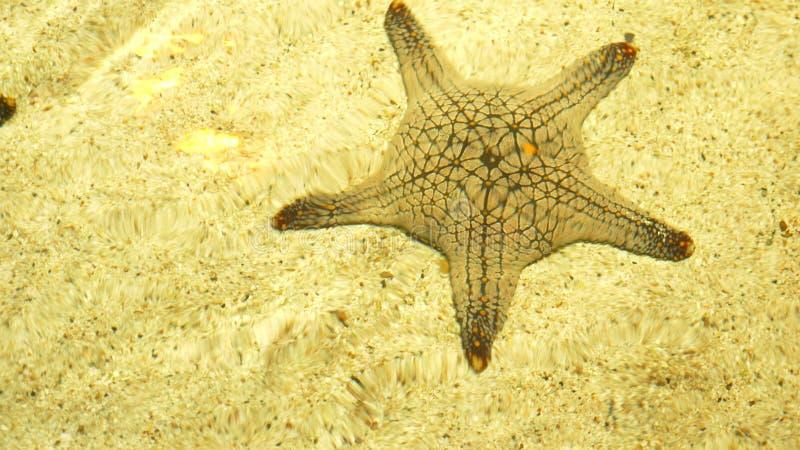 水下的世界,在清楚的水下的海星在太阳的光芒的下浅水区 库存照片