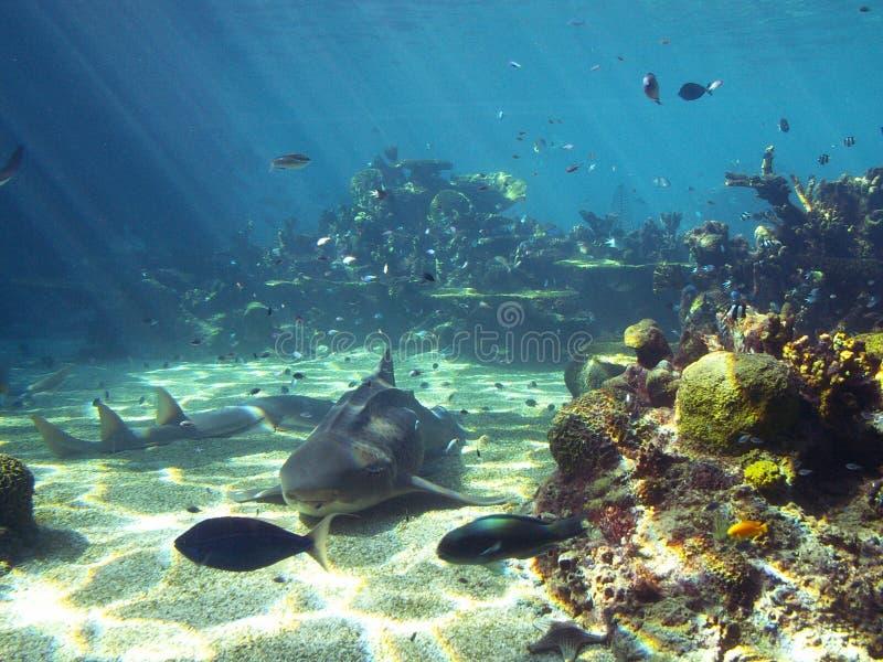水下的场面 库存照片