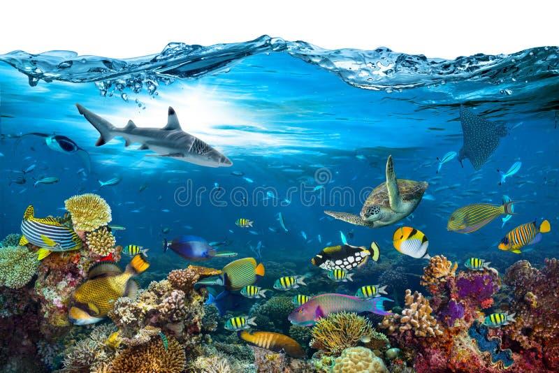 水下的天堂珊瑚礁波浪被隔绝的背景 免版税库存照片