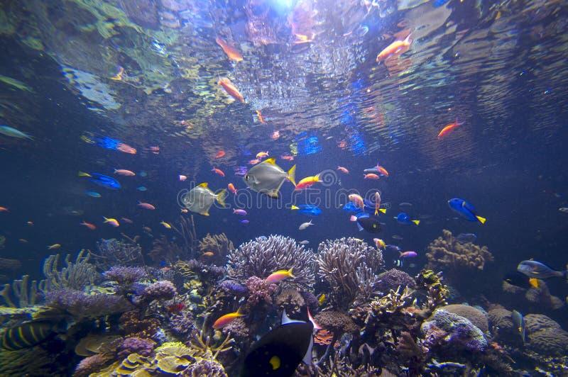 水下的妙境 免版税图库摄影