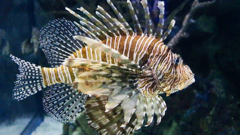 水下的射击-品种鱼 库存照片