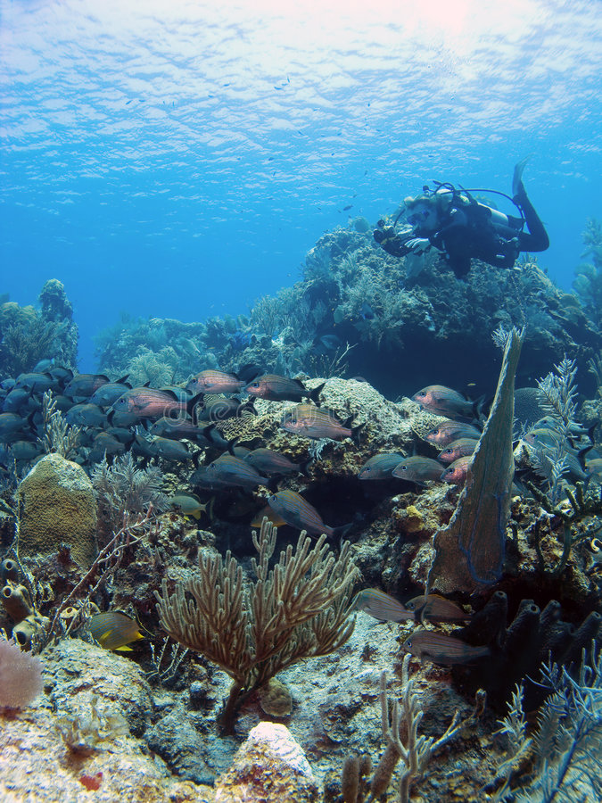 水下的摄影师 库存照片