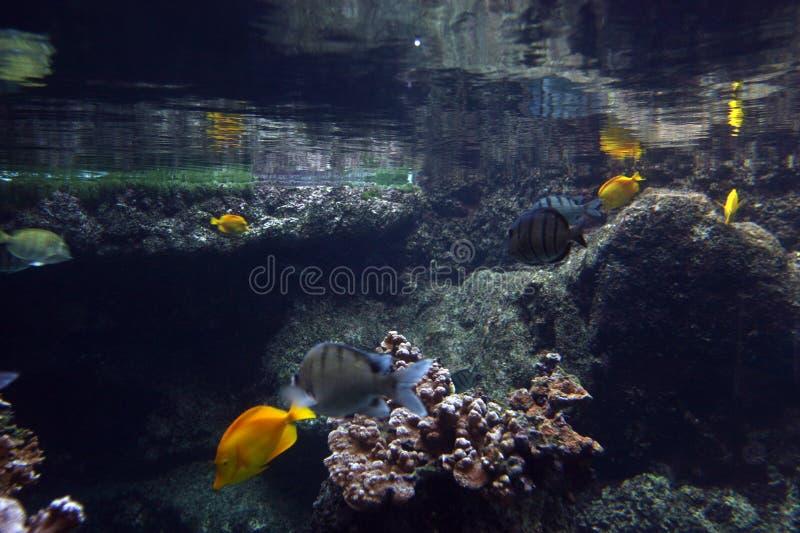 水下的摘要 图库摄影
