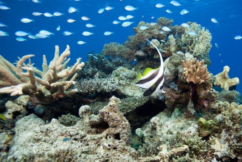 水下的斐济 库存照片