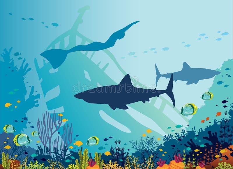 水下的海freediver,鲨鱼,珊瑚礁 库存图片