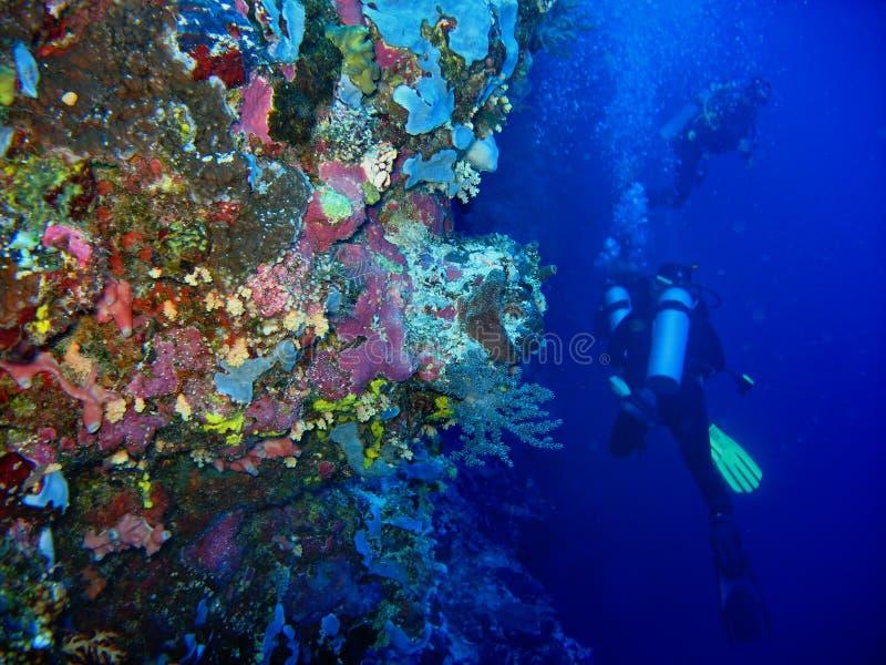 水下的狂放的珊瑚照片在前景的和两名轻潜水员在蓝色净水背景 库存照片