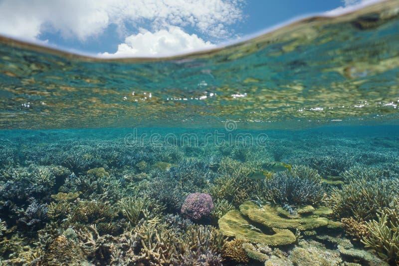 水下的珊瑚礁太平洋大洋洲 库存图片