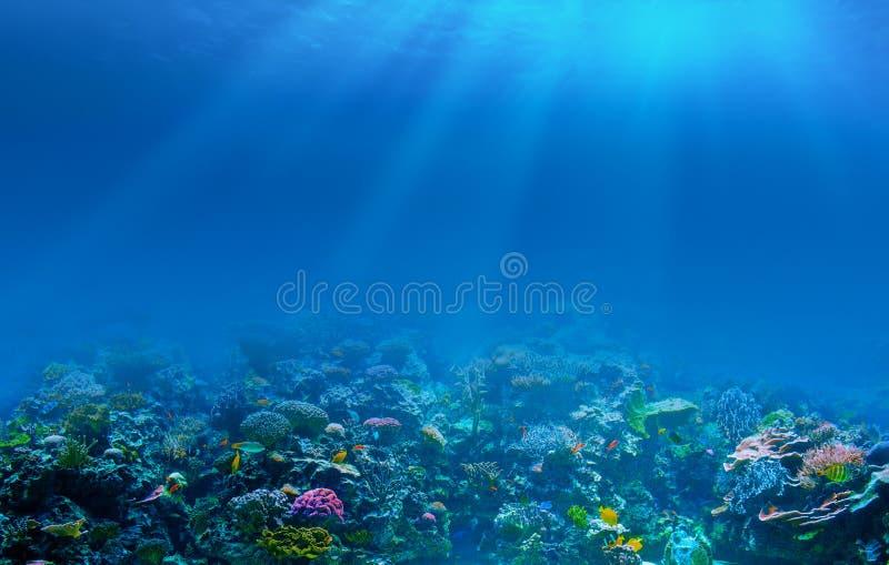 水下的珊瑚礁海底背景 库存图片