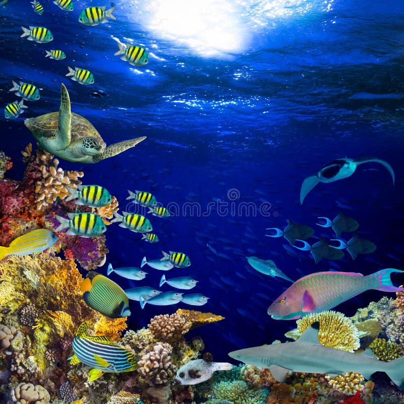 水下的珊瑚礁风景正方形二次方背景 免版税库存照片