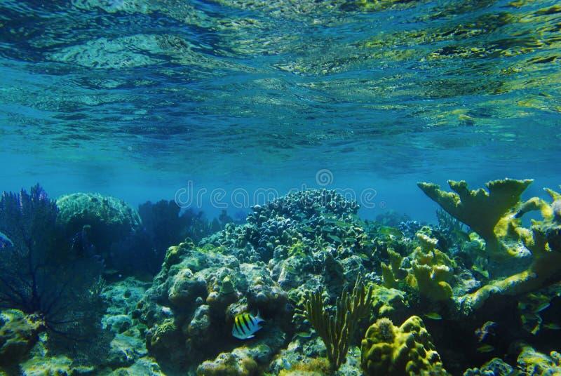 水下的珊瑚 图库摄影