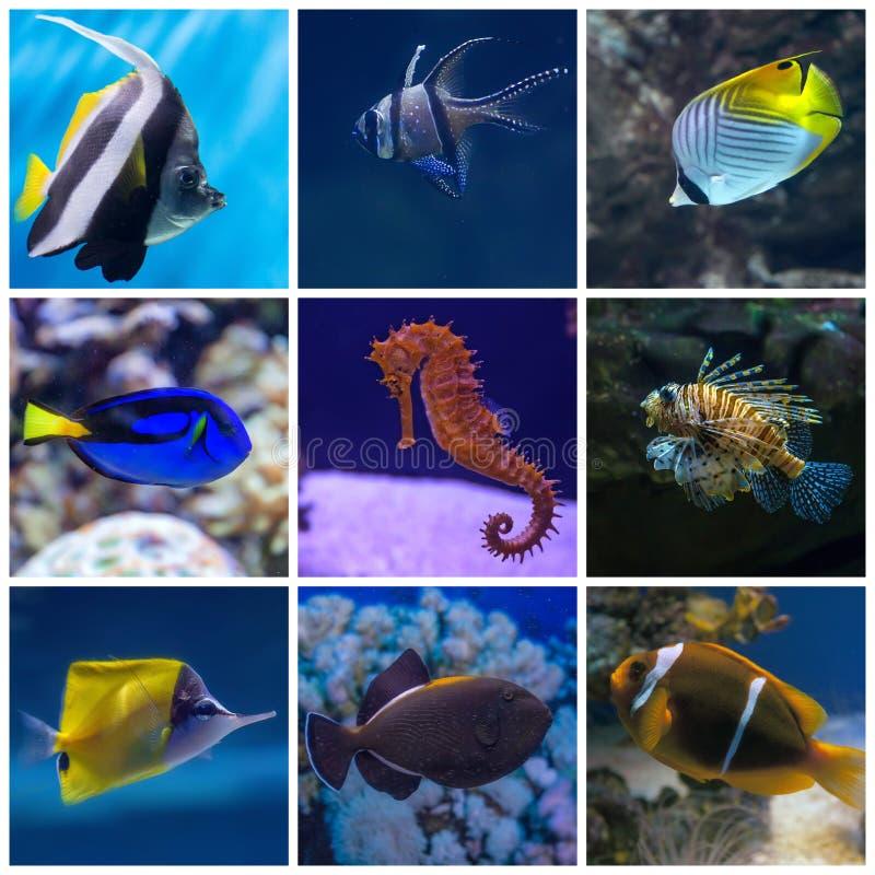 水下的生活拼贴画  鱼设置了热带 免版税库存图片