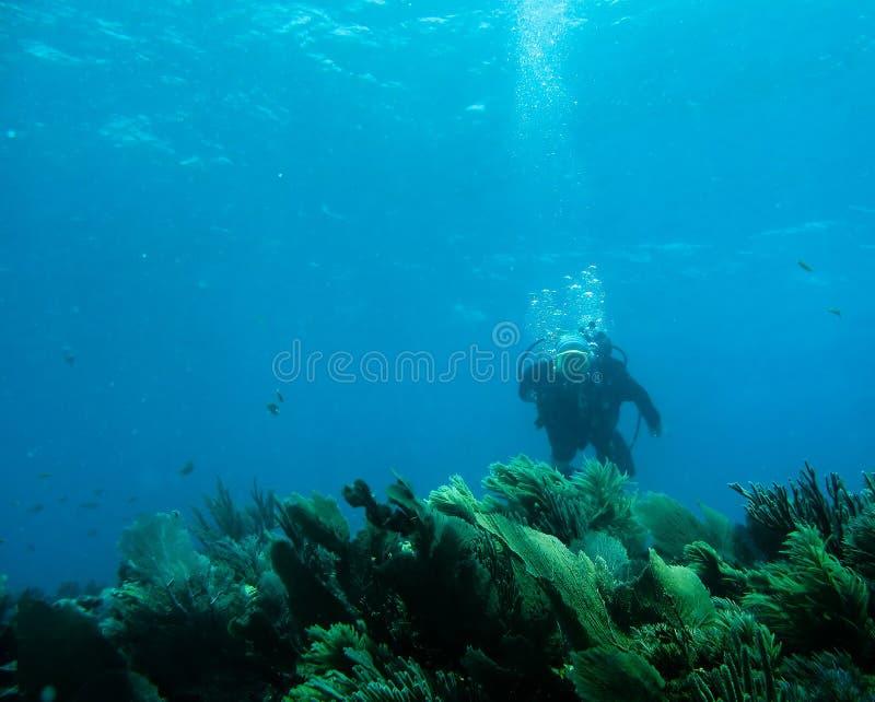 水下的礁石 库存图片
