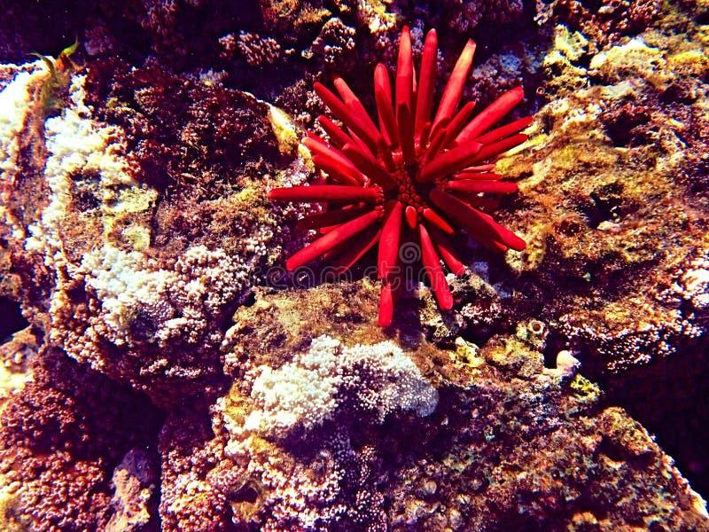 水下的秀丽 免版税库存图片