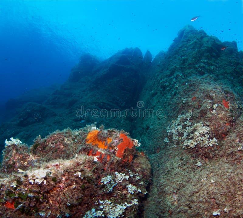水下的风景 钓鱼地中海净海运金枪鱼的偏差 库存照片