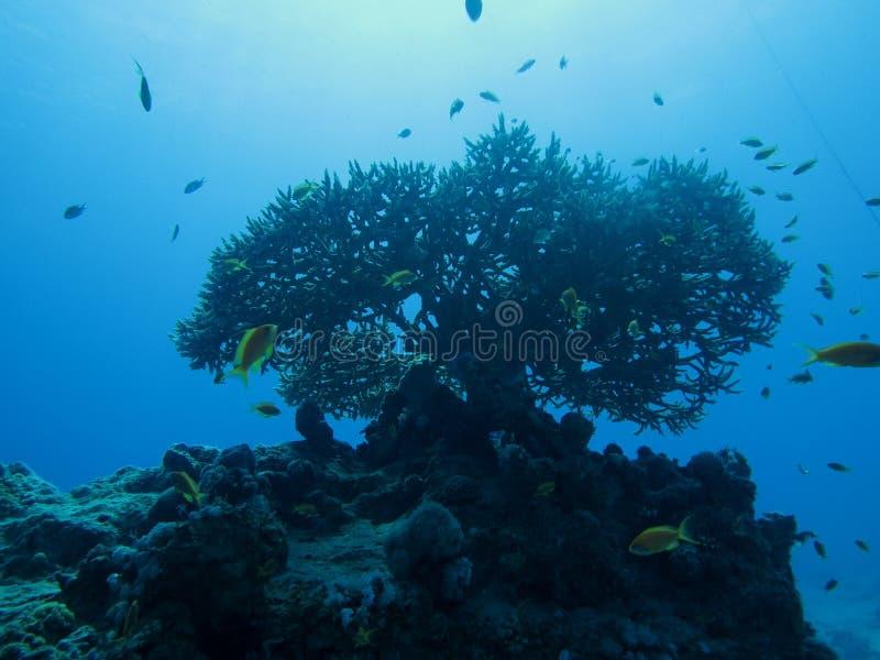 水下的风景 免版税库存照片