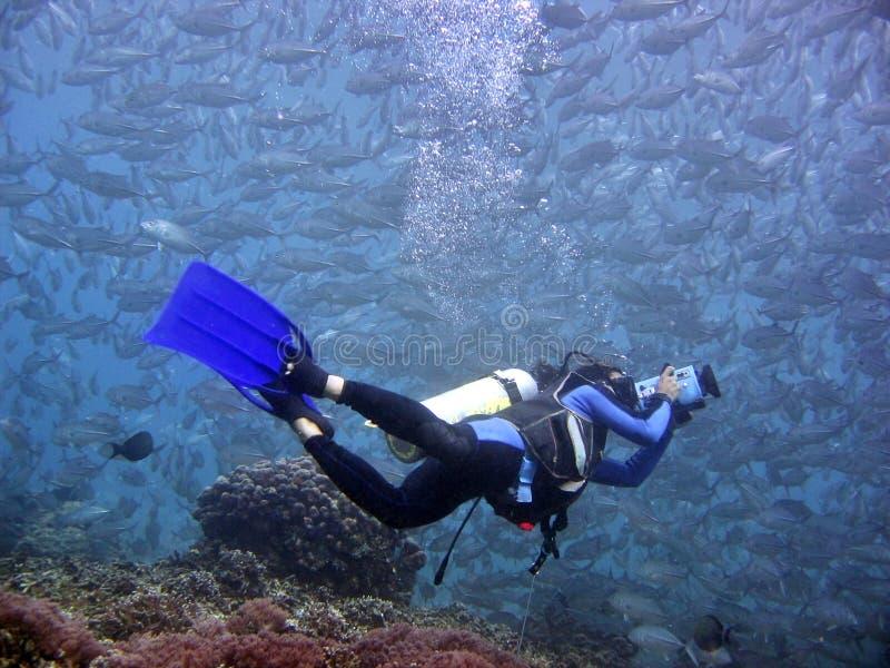水下的videographer 免版税图库摄影