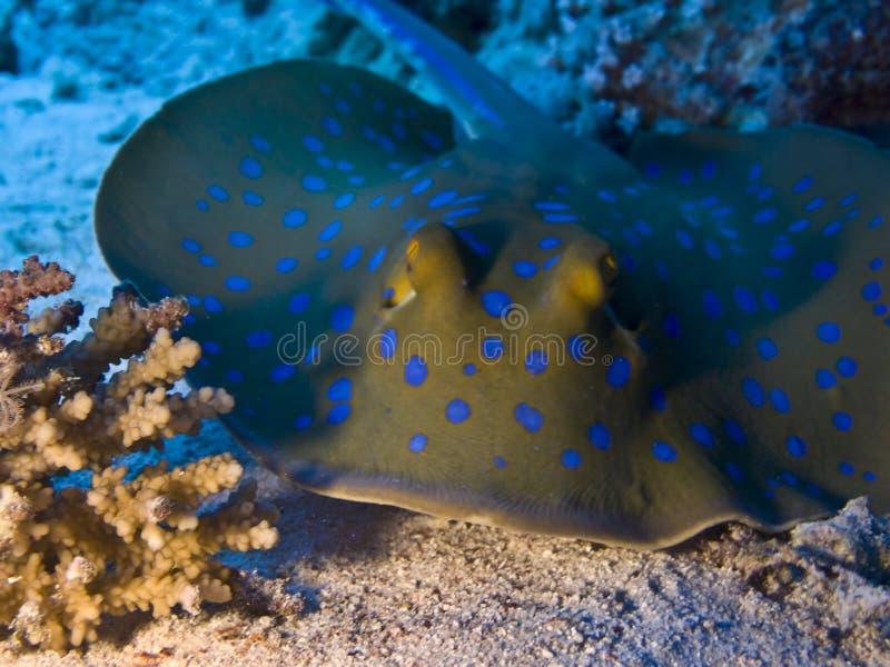 水下蓝色光芒的地点 免版税库存照片