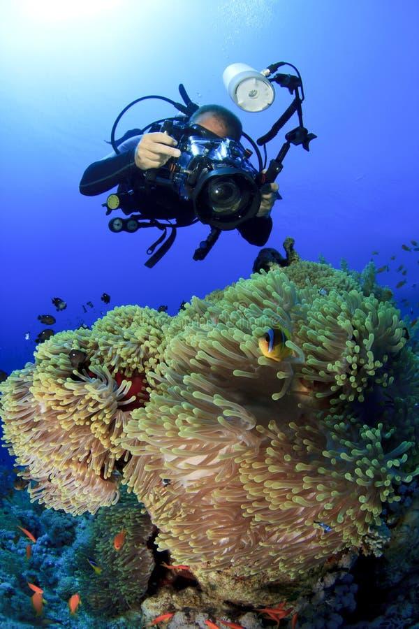 水下银莲花属的摄影师 免版税库存照片