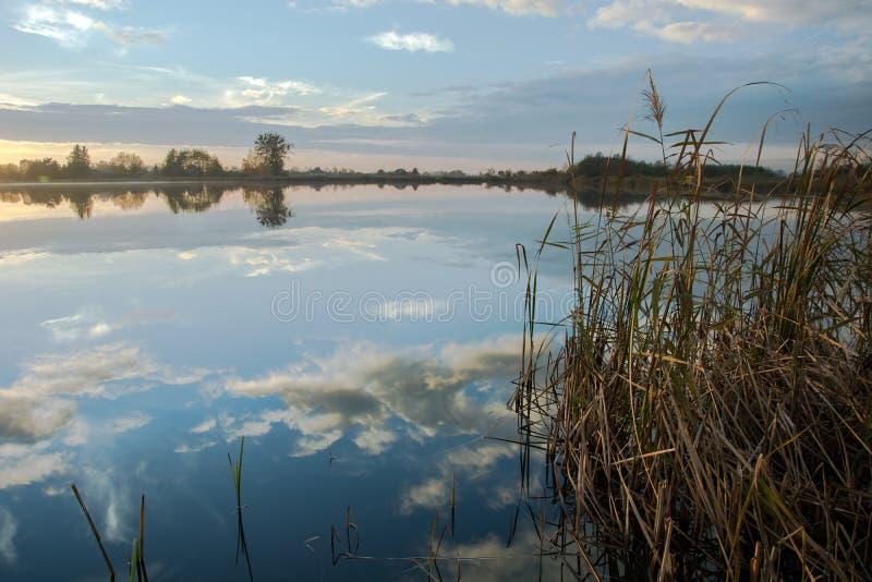 水云彩的芦苇和反射在湖 免版税库存图片