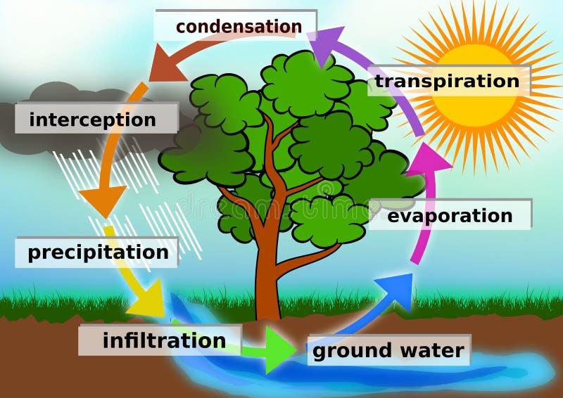 水周期概念例证 库存例证