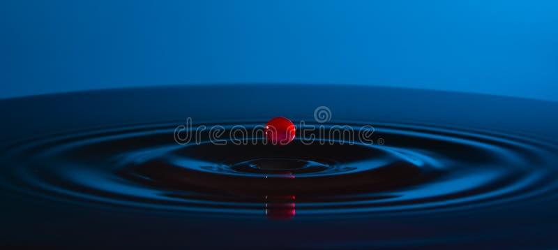 水和圈子RED丢弃在水在蓝色背景 库存图片