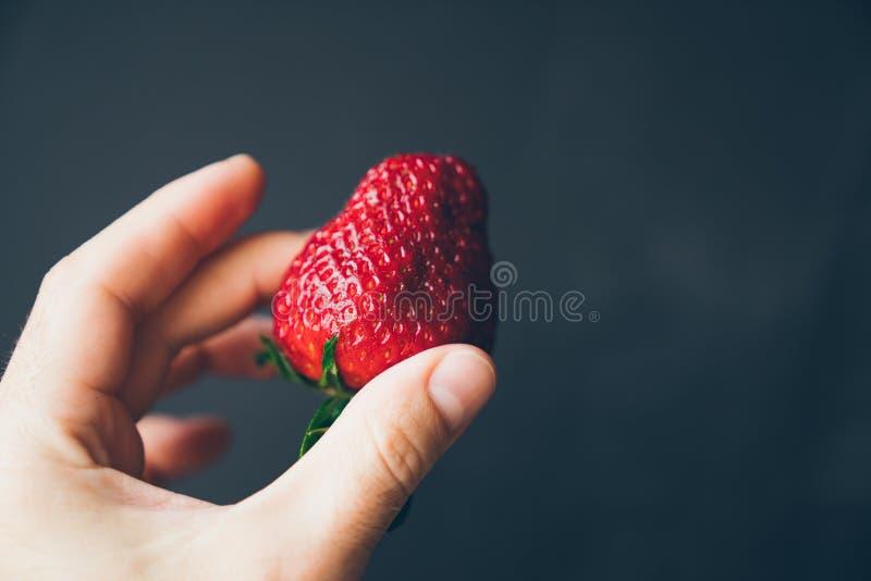 水多的成熟草莓在黑暗的背景的一只男性手上 免版税库存图片