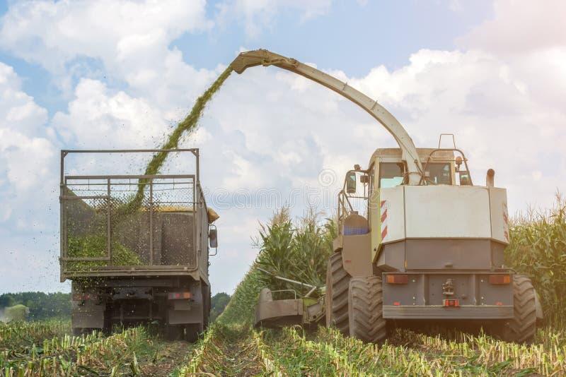 水多的玉米青贮收获乘联合收割机和运输用卡车,放置的在动物饲养 免版税库存图片
