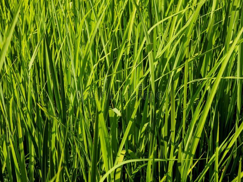 水多的绿草在好日子 背景绿色自然 库存图片