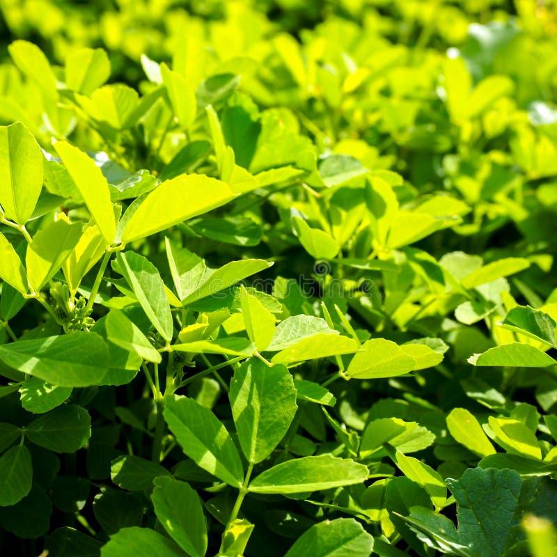 水多的绿草在好日子 自然方形的背景 库存图片