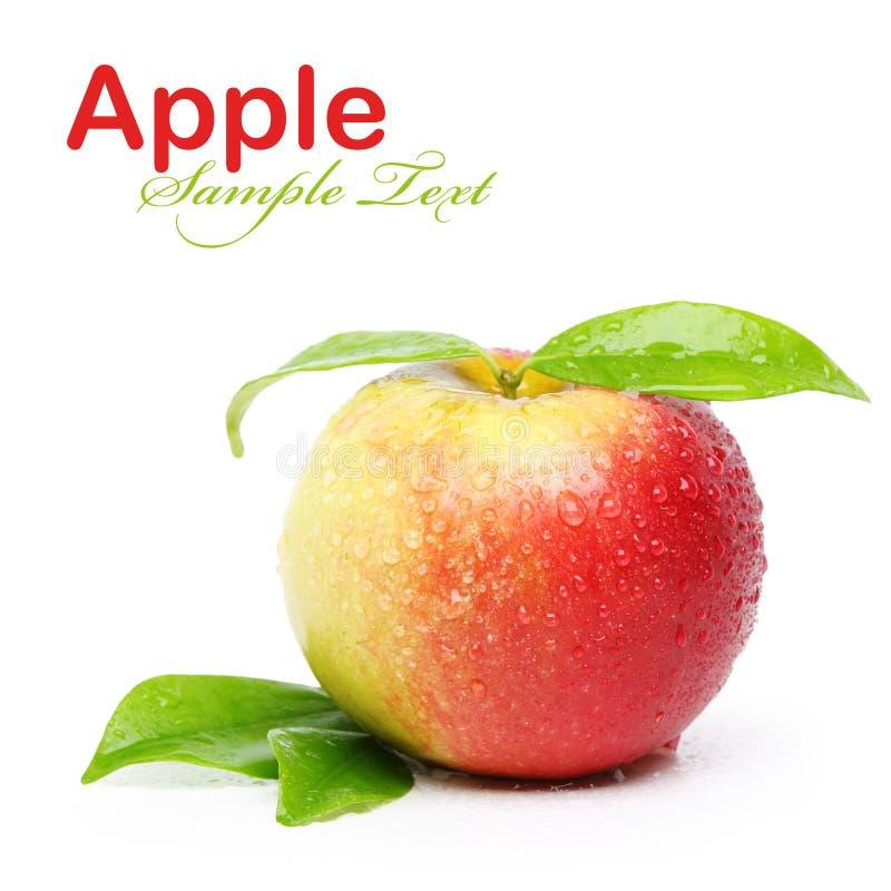 水多的苹果 库存图片