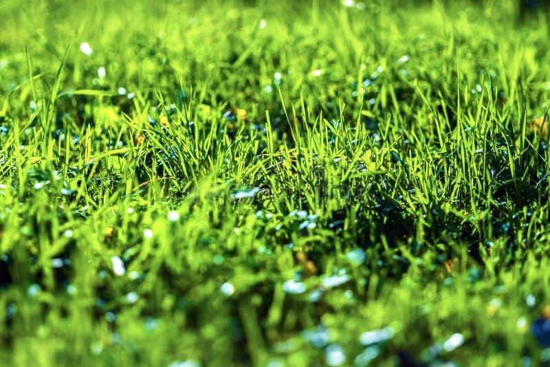 水多的草绿色 免版税图库摄影