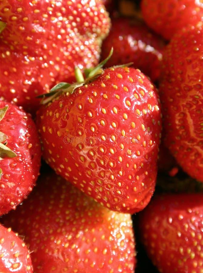 Download 水多的草莓 库存照片. 图片 包括有 食物, 密集, 水多, 夏天, 红色, 深深, 发狂, berrying - 191090