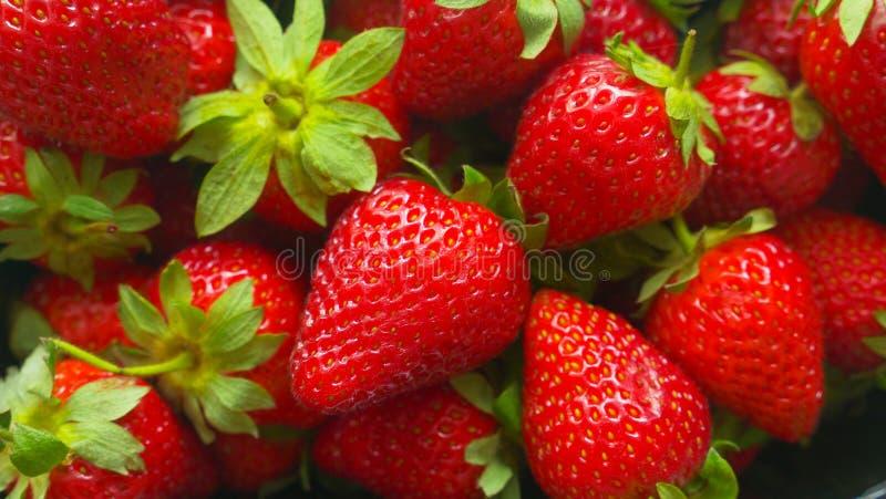 水多的莓果维多利亚001 库存照片
