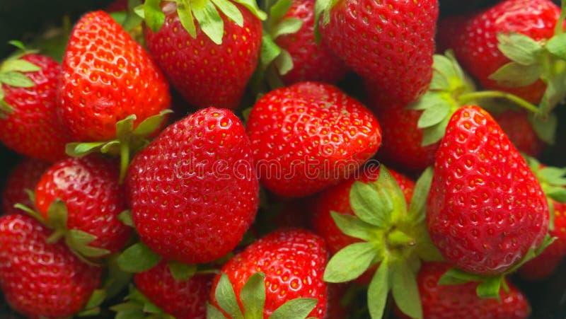 水多的莓果维多利亚003 库存照片