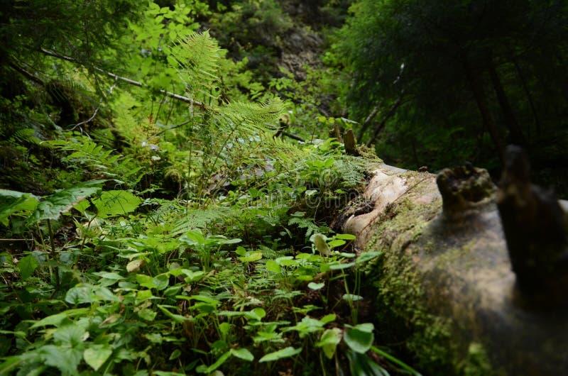 水多,豪华的山植被、蕨和青苔在青苔树 免版税图库摄影