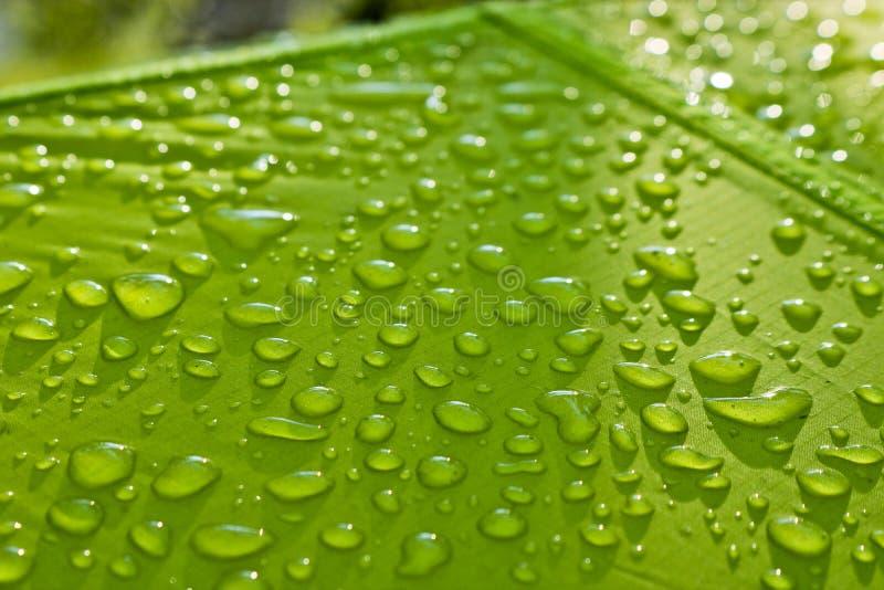 水大滴在绿色纺织品的与一个防水作用 防水剂注入 在织品的纹理下落 库存图片