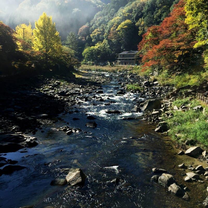 水小河小屋石头森林 库存照片