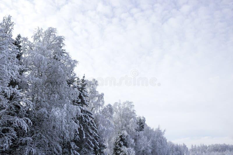 水平森林桦树积雪的风景对角冬天雪太阳路的墙纸 免版税库存照片