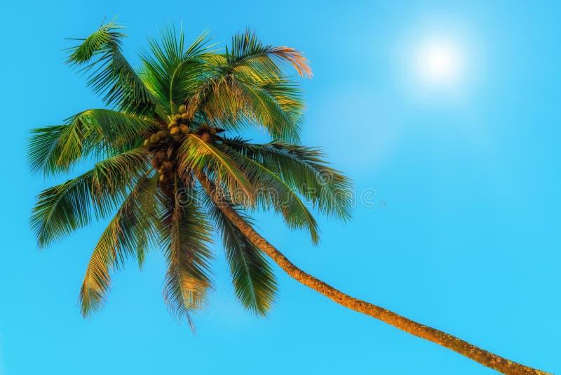 水平的射击-绿色可可椰子和太阳 图库摄影