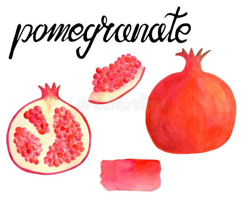 水彩与书法字法的石榴集合 在食物的白色背景隔绝的手拉的红色果子例证 向量例证