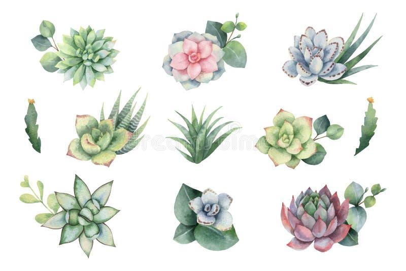 水彩与玉树叶子和多汁植物的传染媒介集合 皇族释放例证