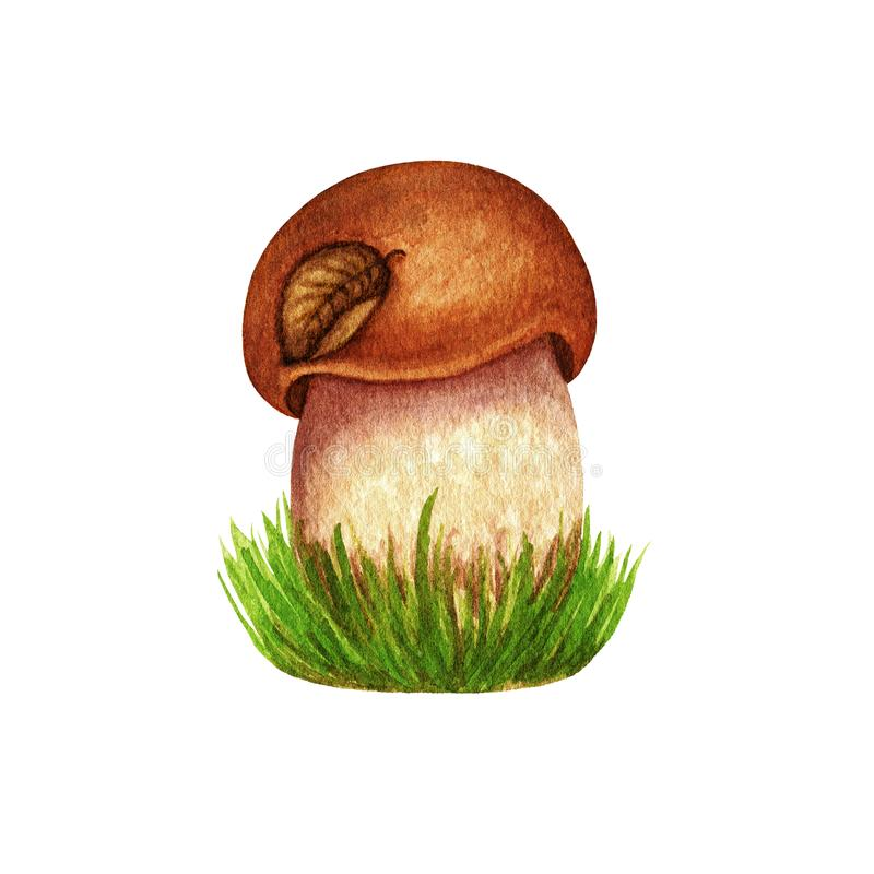 水彩与秋天叶子的森林蘑菇在草的盖帽 在白色背景隔绝的对象 植物的手拉的秋天 免版税库存照片