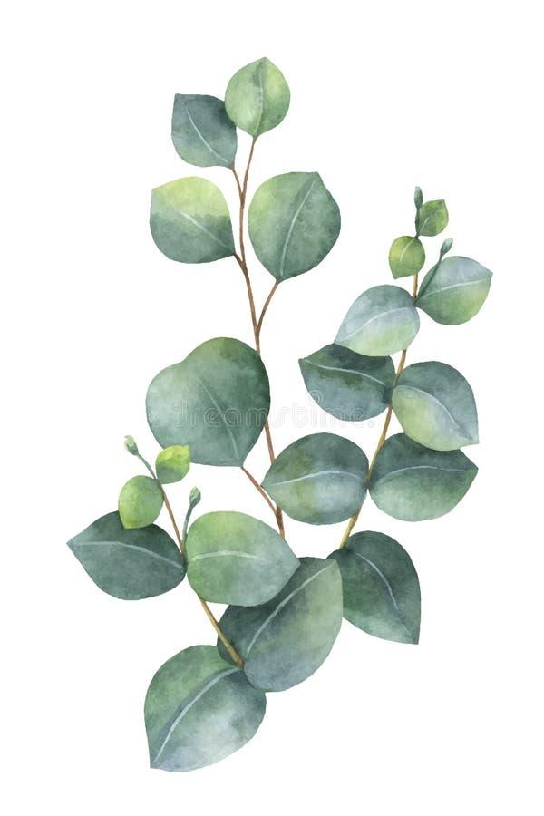 水彩与绿色玉树叶子和分支的传染媒介花束 库存例证