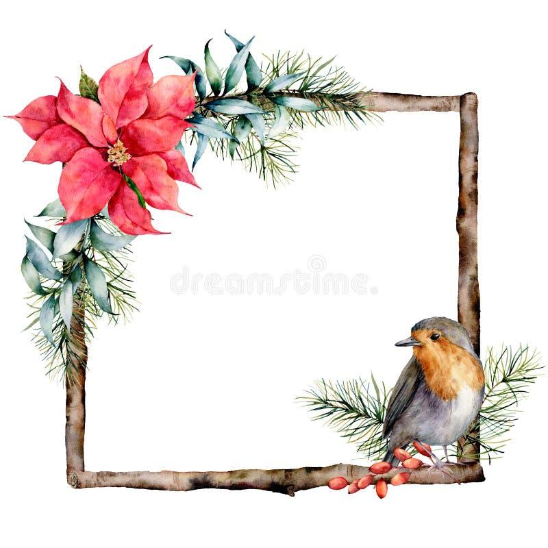水彩与花卉装饰和知更鸟的圣诞节框架 与poinsetiia,玉树叶子的手画木分支 皇族释放例证
