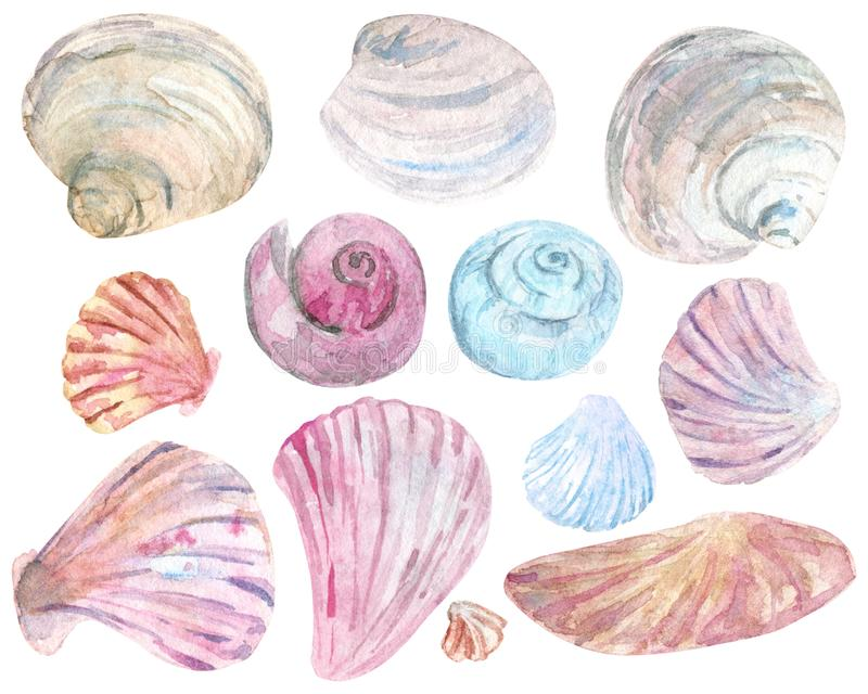 水彩五颜六色的壳剪贴美术 皇族释放例证